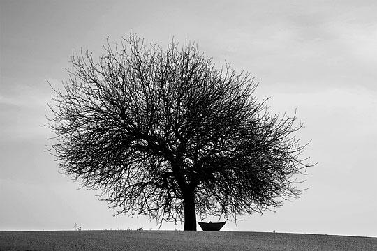noa ben-nun melamed, black and white tree